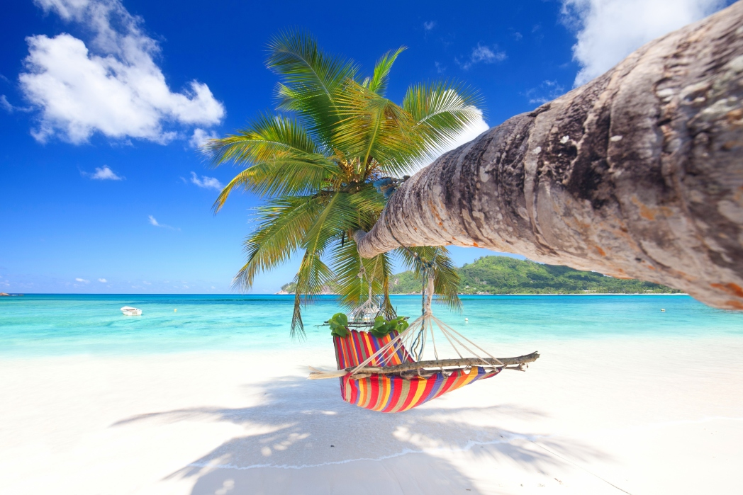 Palm tree with hammock on a beach in the Seychelles
