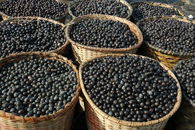 Boost your health with this superfood in Belem.
