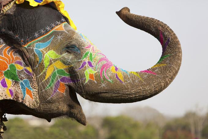Elephant Festival, Jaipur