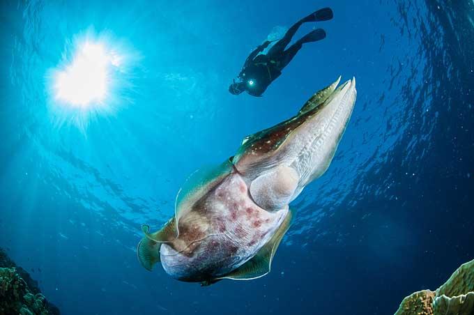 scuba diving, Tomini Bay