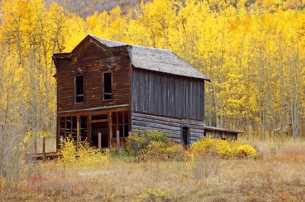 Abandoned house in a field of pine trees with bright yellow leaves, St Elmo