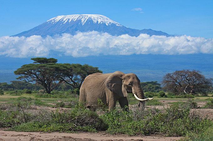 An elephant and Mount Kilimanjaro, Tanzania