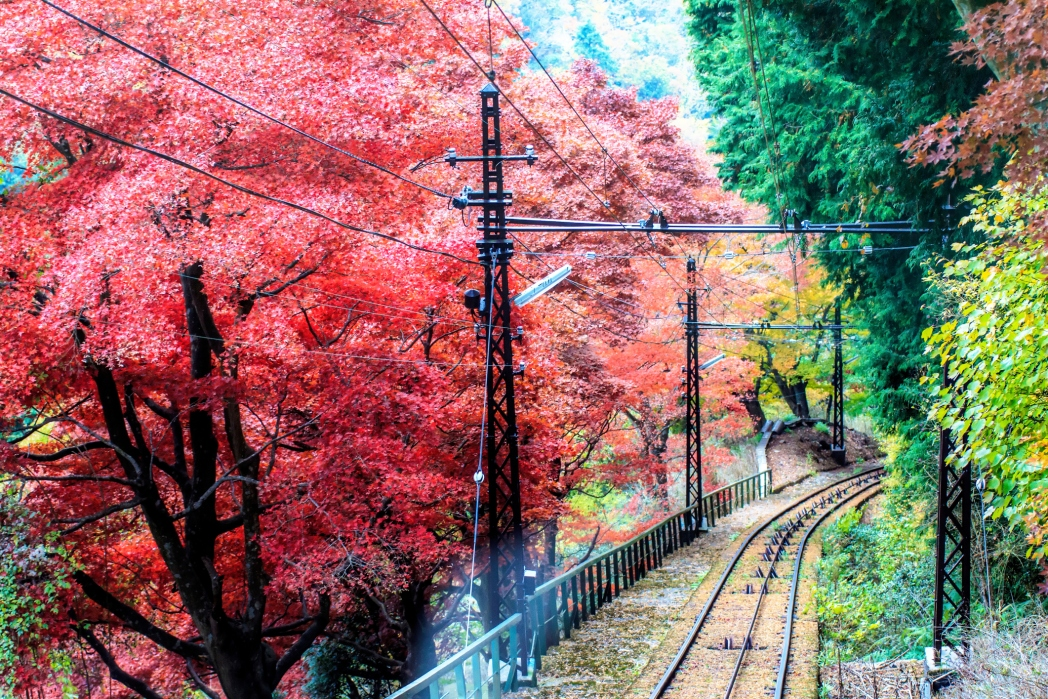 The train line leading to Enryakuji Temple Japan, autumn trees red and yellow
