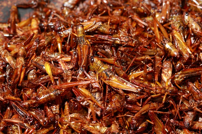 Fried grasshoppers, Thailand.