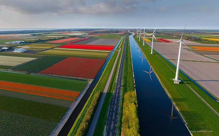Multi-coloured fields of flowers, Keukenhof Tulip Fields, The Netherlands